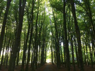 Duits Leren Tijdens Een Mooie Wandeling In Het Bos.